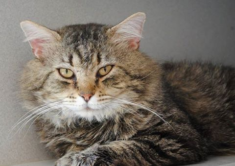 good-news-at-good-mews-june-adoption-special.jpg