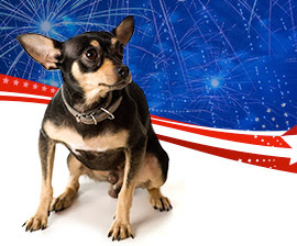 JULY FOURTH FIREWORKS: AWESOME FOR HUMANS, TERRIFYING FOR PETS