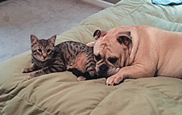 meet-caesar-boomer-the-february-pets-of-the-month.png
