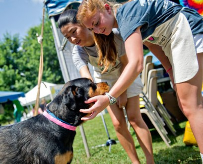 cobb-county-animal-control-shelter-hosts-annual-art-barks-and-purrs.jpg