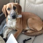 Pet of the Month: Maggie