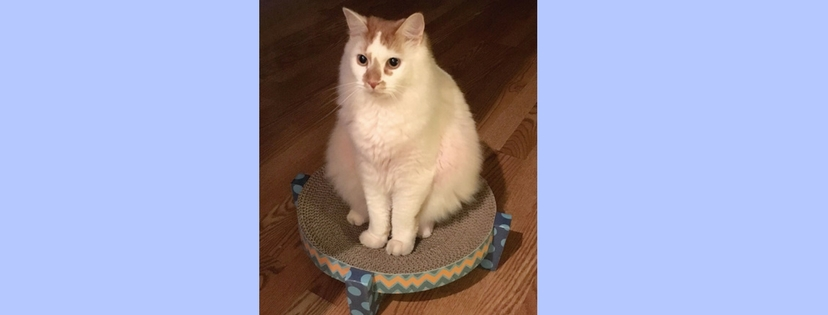 Pet of the Month: Valentino