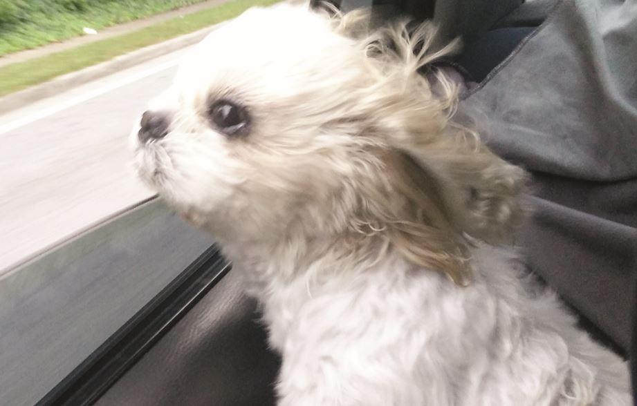 Pet of the Month: Benji