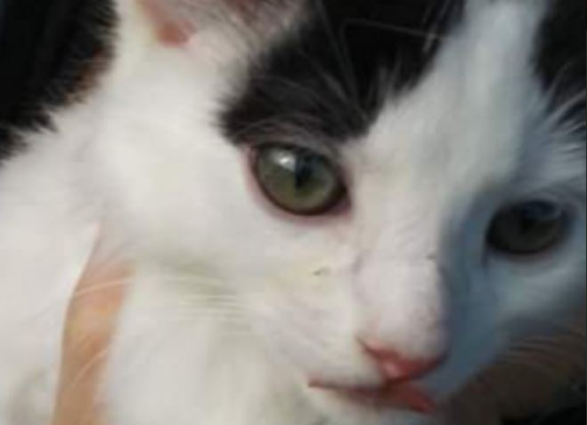 PET OF THE MONTH: BEXLEY