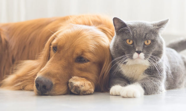 DO GOOD FOR DOGS, CATS AND OTHER ANIMALS