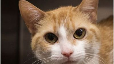 adoption-special-at-cobb-county-animal-control.jpg