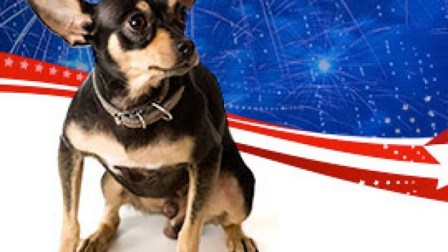 july-fourth-fireworks-awesome-for-humans-terrifying-for-pets-2.jpg