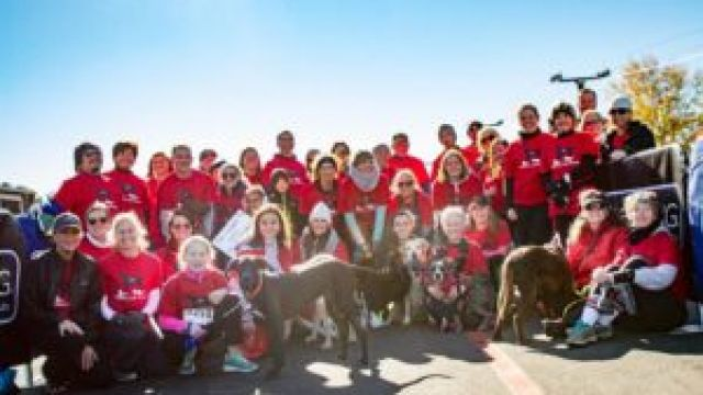 run-with-your-dog-at-the-atlanta-lab-rescue-road-race-4.jpg
